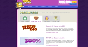 bingo on the box promotions